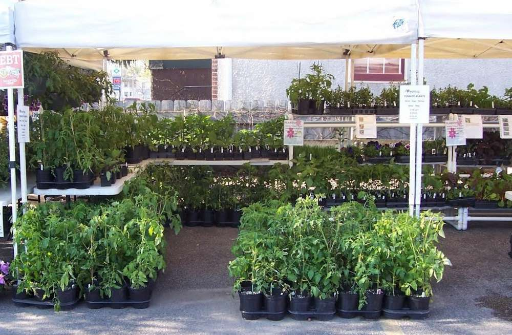 A variety of plants available during spring markets