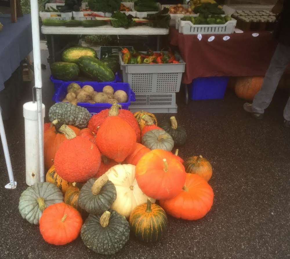 A variety of fall pumpkins